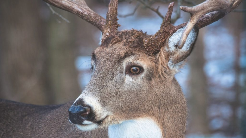 How do deer see