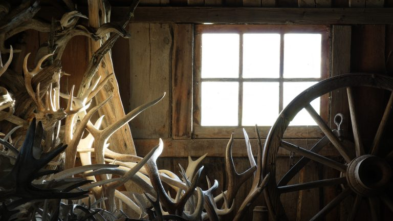 Benefits of Shed Hunting
